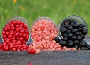 Les 3 cures naturopathiques