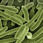 Bactérie E Coli et Pr Déchelotte
