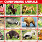 Qu'est ce qu'un omnivore?